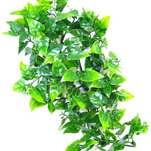 Zoo Med Natural Bush - Mexican Phyllo Aquarium Plant
