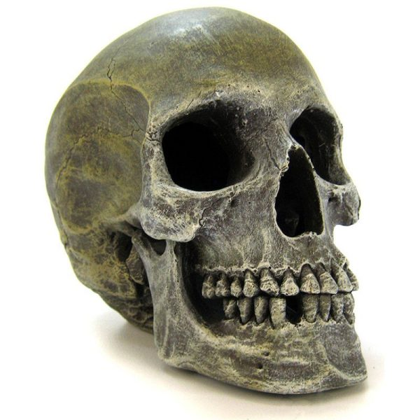Blue Ribbon Human Skull Ornament