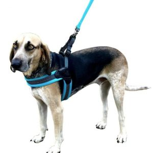 Sporn Easy Fit Dog Harness Blue